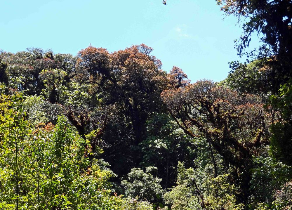 Ang Ka Nature Trail - Doi Inthanon (4/6)