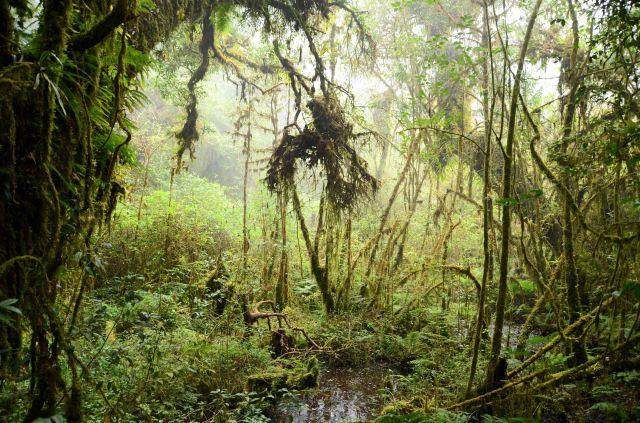 Ang Ka Nature trail, Doi Inthanon (2)