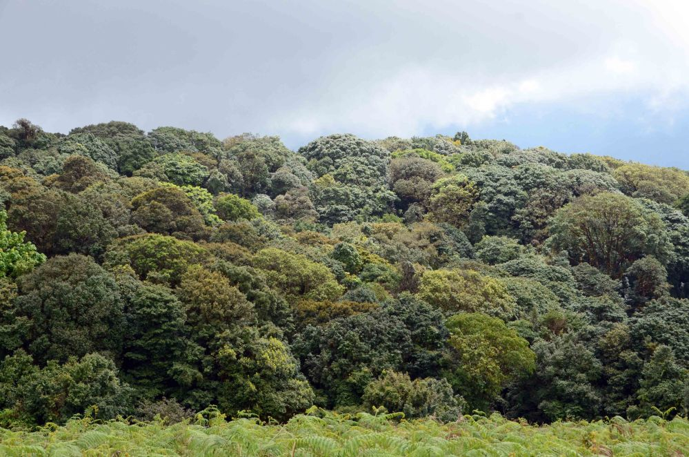 Kew Mae Pan, Nature Trail - Doi Inthanon National Park  (5/6)