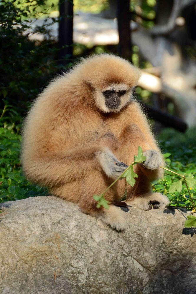 Chiang Mai Zoo (4/6)