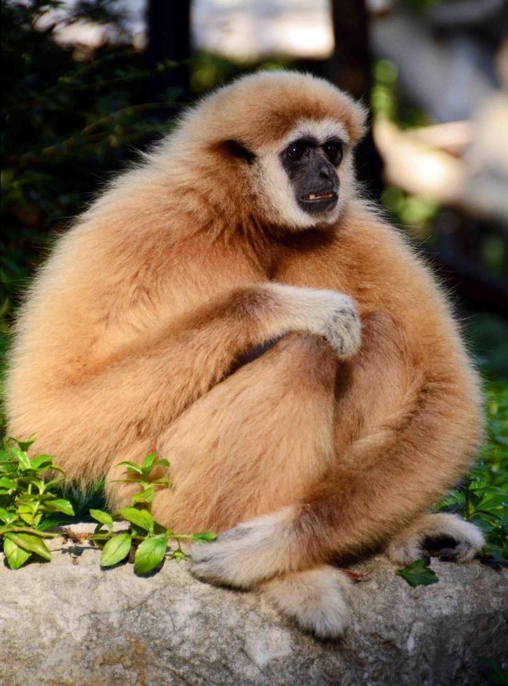 More gibbon photos! (3/3)