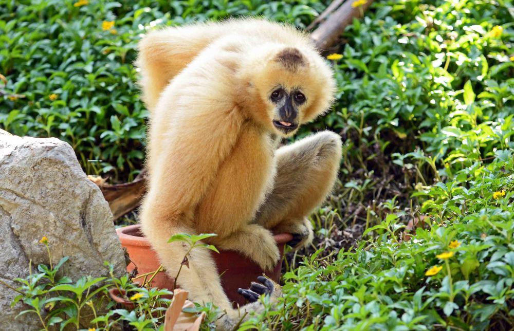 Chiang Mai Zoo (2/6)