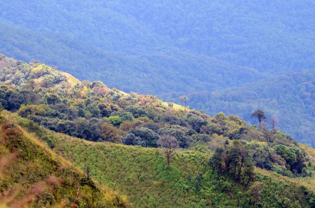 View from Doi Inthanon