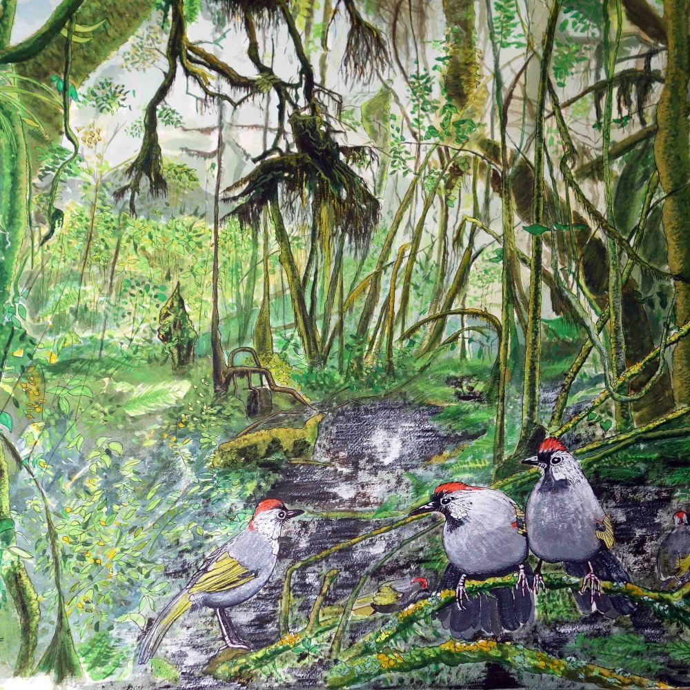 Birds in a bog! (1/2)