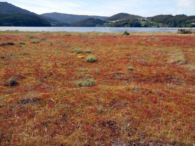 Flowering dune ecosystem in June