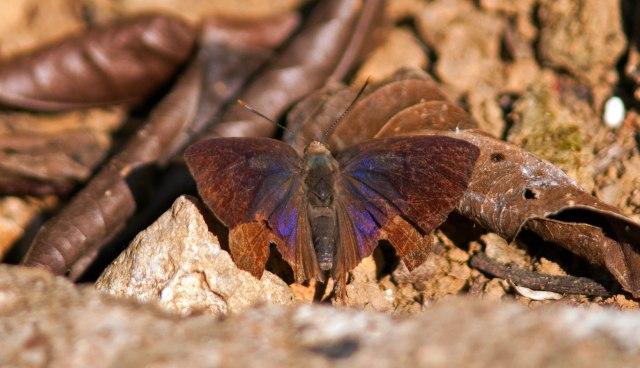 Worn butterfly