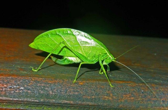 Hemipterans evolved over 373 million years ago