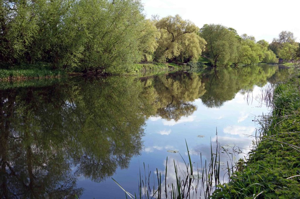 Great Ouse on 13 May 2015, near Felmersham, Beds