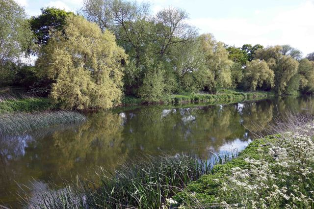 River bank of the Great Ouse, near Felmersham, Beds, on 13th May 2015.
