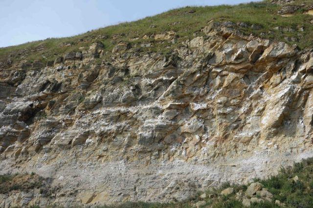 Kittiwakes on Castle Cliff, Scarborough (24-07-15)
