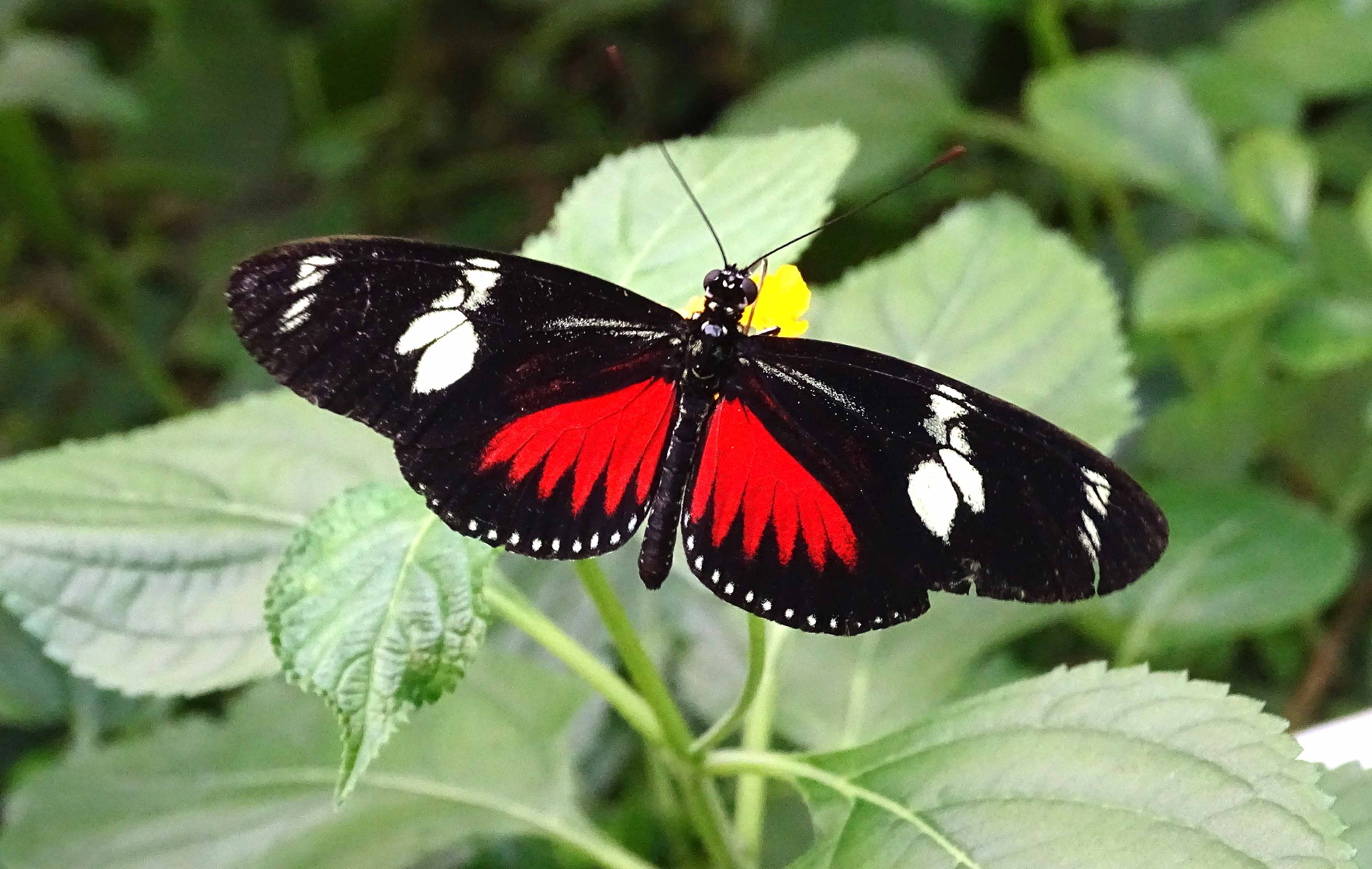 Butterfly Pavilion at Artis Zoo – Ray Cannon's nature notes