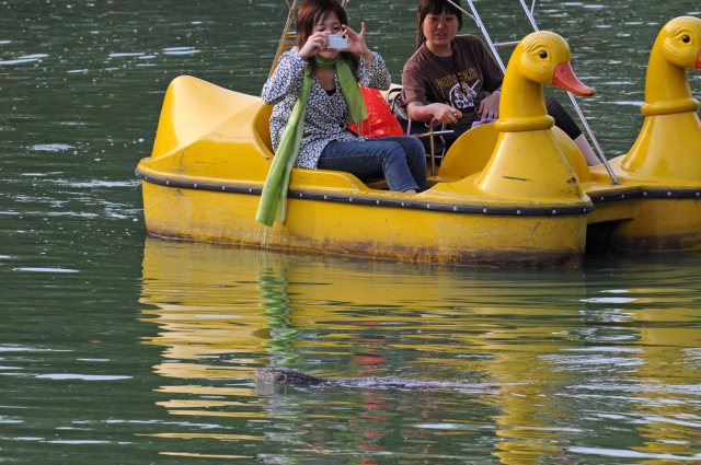 Boaters in Lumpini Park photographing a swimming monitor lizard