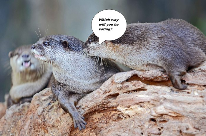 Asian small-clawed otters (Aonyx cinerea) fortunatley they do not have to vote!