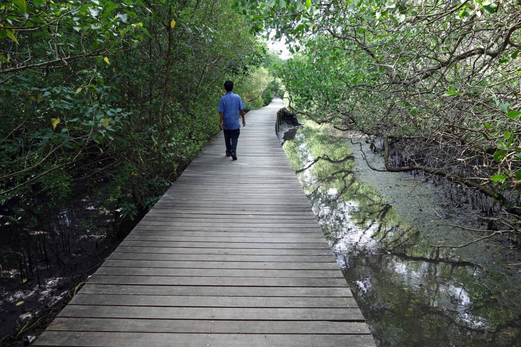 mangrove-broadwalk-1