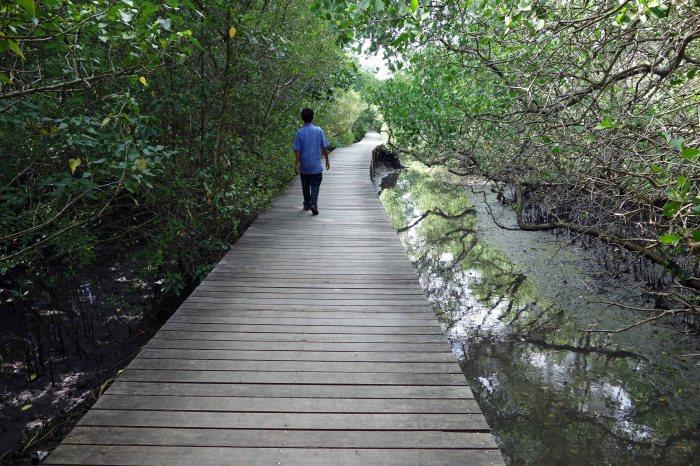 mangrove-broadwalk-1