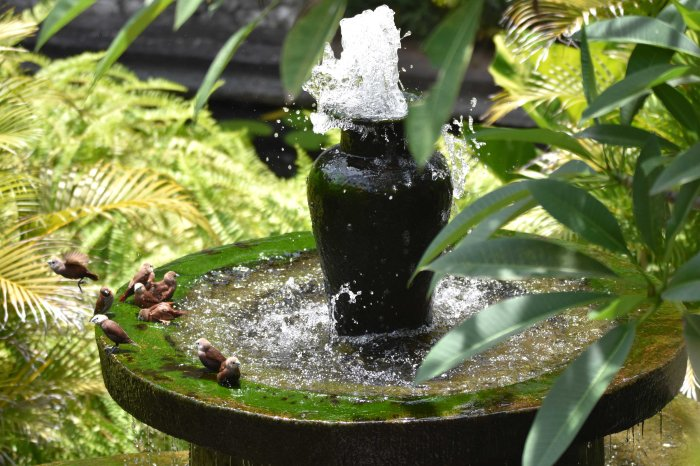Water fountain with munias