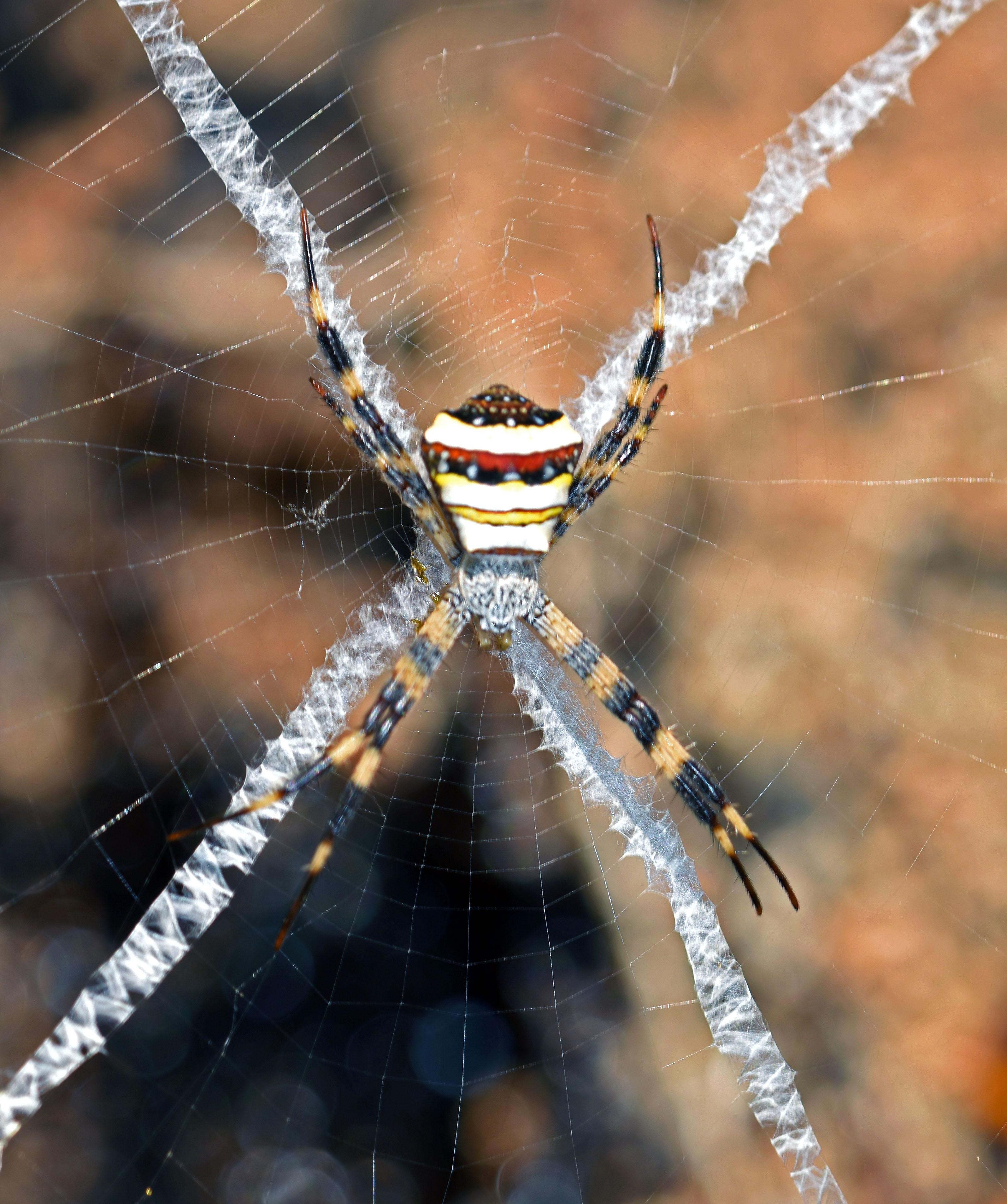 Spider Web Halloween Decorations: Stabilmenta: Spider's Web Decorations