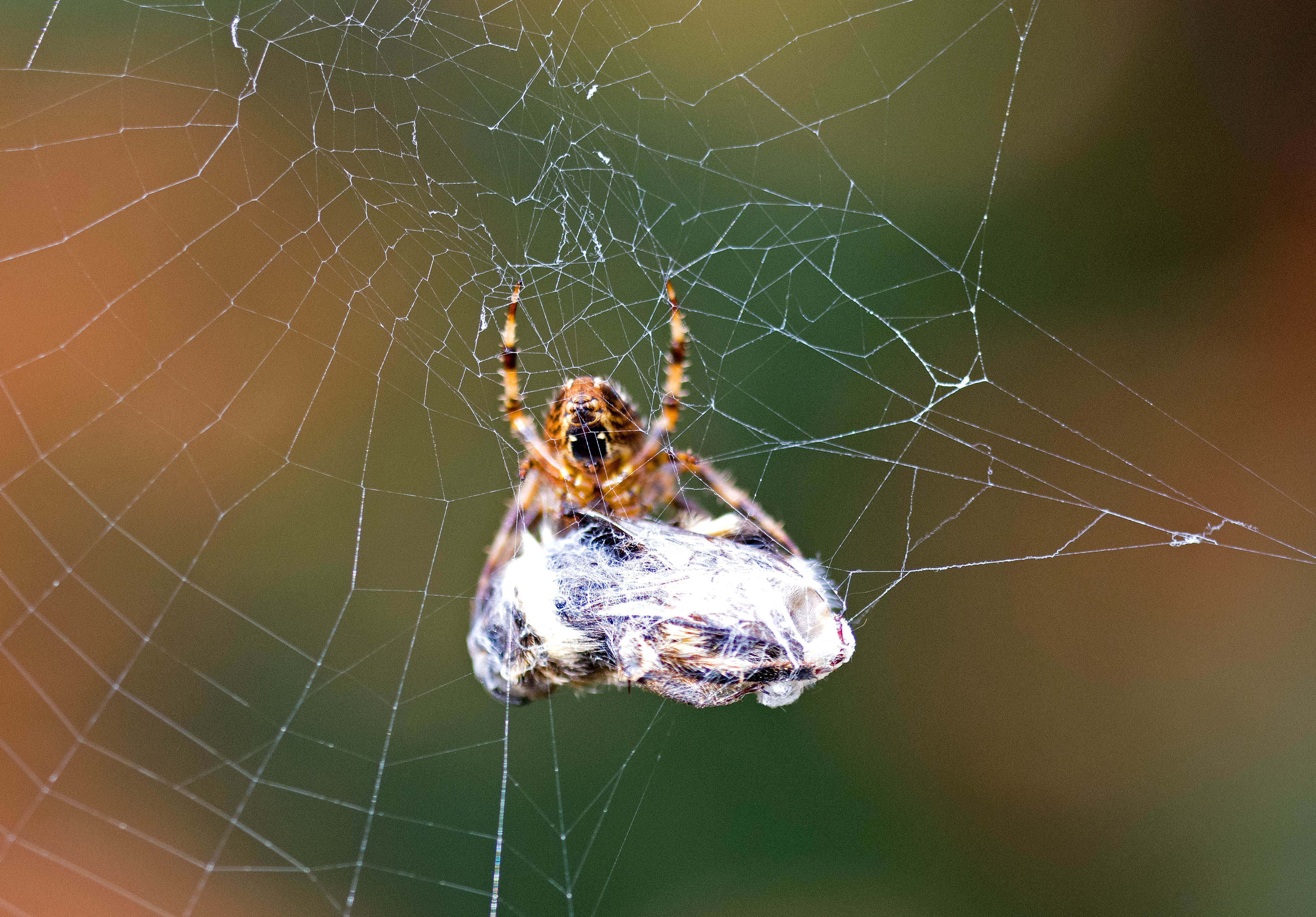 Spiders, silk and packed lunches – Ray Cannon\'s nature notes